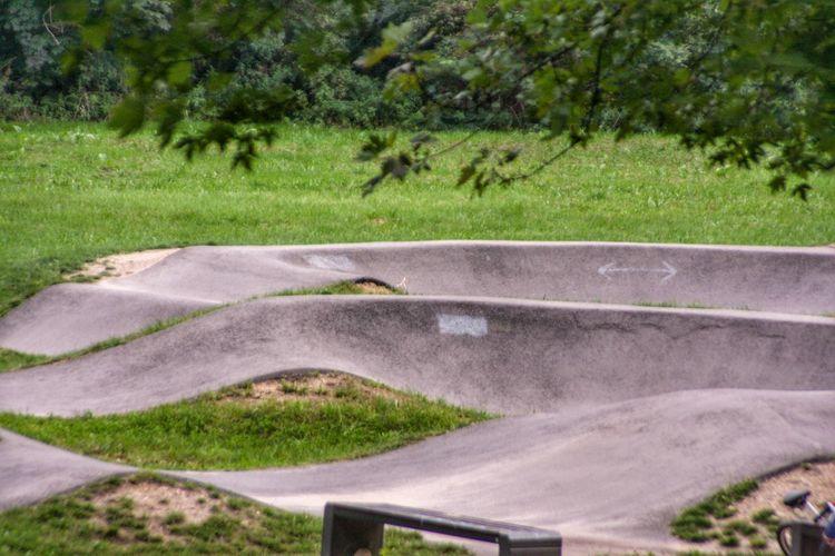 Tree Water Road