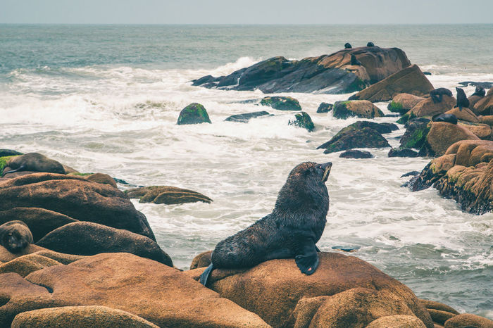 Sea Lions by the coast of Cabo Polonio, Uruguay. Cabo Polonio Sea Lion Animal Animal Themes Animal Wildlife Animals In The Wild Aquatic Mammal Beach Beauty In Nature Coast Day Horizon Over Water Mammal Nature No People Outdoors Rock - Object Rocky Coastline Scenics Sea Sea Life Water Wave Wild Wildlife The Great Outdoors - 2018 EyeEm Awards