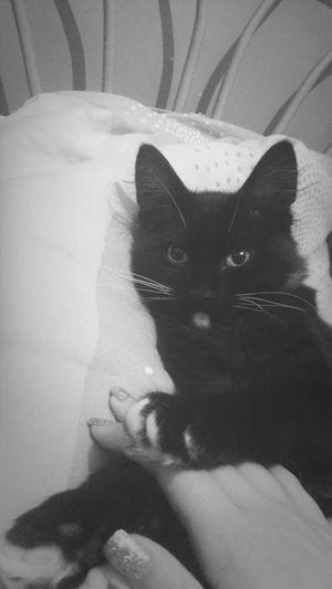 Baby Cat♡ Kitten!