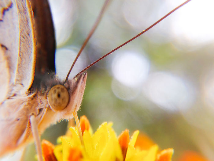 Butterfly Insect Macro Nature Plant Animal Wildlife Beauty In Nature Flower Flower Head Focus On Foreground Animals In The Wild Animal Themes Outdoors Close-up No People Day One Animal Nature Selective Focus Mobilephotography Paint The Town Yellow
