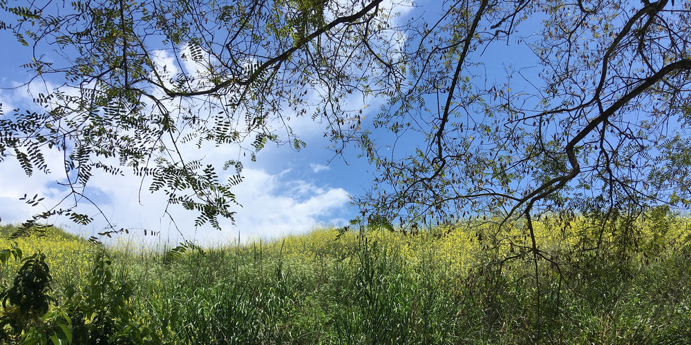 Blue sky with some clouds over the coastal foothills in Santa Barbara at springtime Plant Tree Sky Growth Beauty In Nature Land Tranquility Tranquil Scene Landscape Environment Nature Field Scenics - Nature No People Non-urban Scene Green Color Day Grass Cloud - Sky Yellow Outdoors Spring