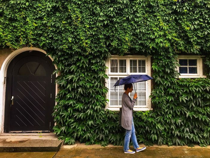 Full Length Of Woman With Umbrella Walking Against House Covered With Ivy During Monsoon