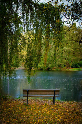 Bench by lake in park during autumn