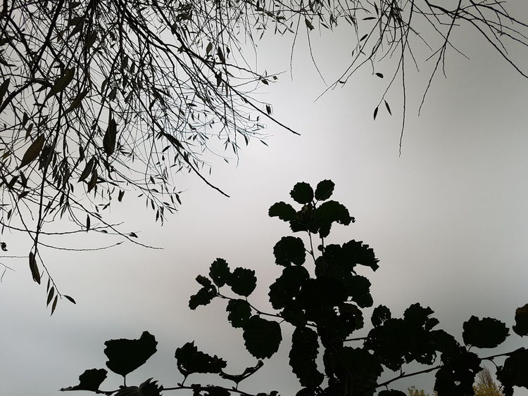 Tree Nature Silhouette Leaf Outdoors No People Beauty In Nature Plant Day Sky Branch Cloudy Skies Leaves Lucie Burns Lucieburnsphotography Nature Photography Nature Branches No Leaves Branches Silhouette Branches Leaves Silhouette EyeEmNewHere