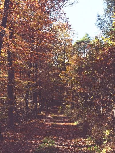 Tree Forest Nature Tranquility Tranquil Scene No People Beauty In Nature Growth Scenics Day Autumn Outdoors