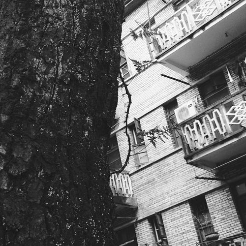 Old Old House Old Buildings Tree Leaves Leaf Black Blackandwhite Black & White