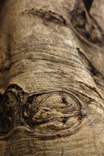 texture on the bark of tree Plant Green Pattern Background Beautiful Nature Bark Forest Tree Art Abstract Close-up No People Textured  Day Outdoors