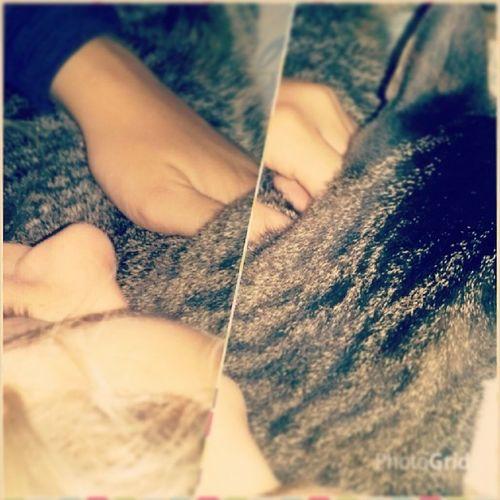 Dormindo de conchinha Tiiii Gato Piolhodecobra Casadasah fds preguiça