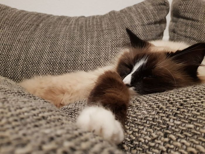 Close-up of cat lying on sofa at home