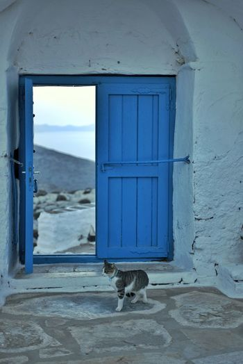 Open Door Door_series Cats Of EyeEm Cats Greece Blue Eye4photography  EyeEm Gallery Hello World Wonderful Place Wonderful View View Into Land EyeEm Selects Window Door Close-up Architecture Cat Stray Animal EyeEmNewHere A New Perspective On Life Capture Tomorrow My Best Photo 17.62° Springtime Decadence