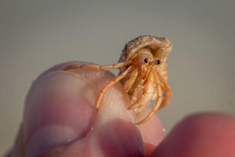 hermit crab Human Perspective Human Hand Brown EyeEm Selects Human Hand Portrait Sea Life Holding Close-up Hermit Crab Animal Shell Crab Arthropod Invertebrate Mollusk Crustacean Seashell