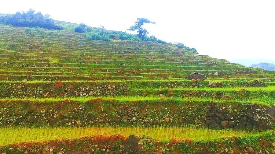 Mini rice terraces Agriculture Farm Environmental Conservation Field Nature Landscape Rural Scene Cloud - Sky Sky Outdoors Day No People Irrigation Equipment Beauty In Nature Hill Plant