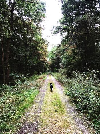 Dog Tree Full Length Rear View Forest Dirt Road Walking Growth The Way Forward Nature Plant Tranquility Tranquil Scene Footpath Day Outdoors Green Color Beauty In Nature Solitude Scenics Remote