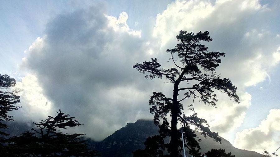 Sun Filtering Through The Clouds Beautiful View Beautiful Nature Tree Sky Cloud - Sky Treetop