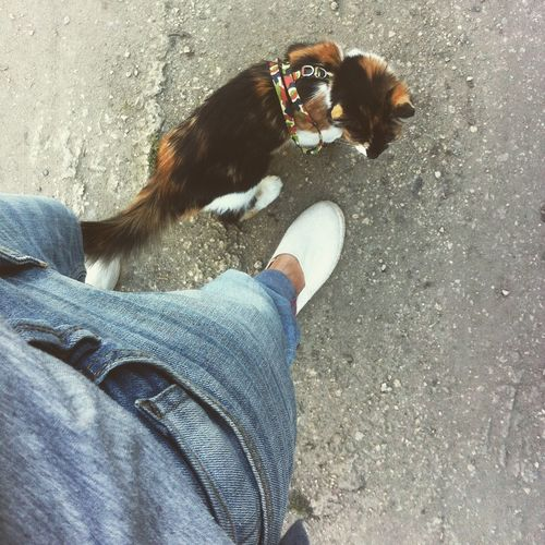 Walking Foot Cat Pet Collar Denim Jacket