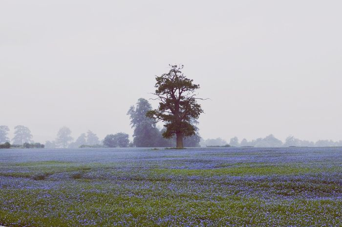 The Great Outdoors - 2015 EyeEm Awards Cotswolds Broadway Linseed Landscape Tree Flower Flowers Field Blue Landscapes With WhiteWall The Essence Of Summer