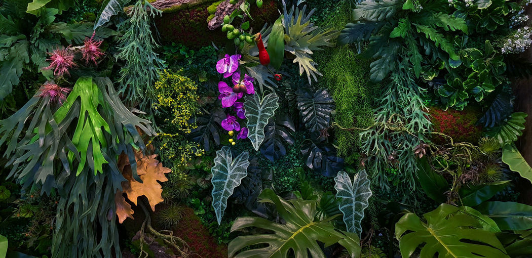High angle view of flowering plants on land