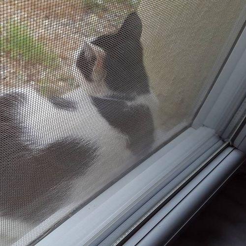 Bizi ayıran tek şey aramızdaki pencereydi kedicik 😍😺💚 Cat Animallove Minikdostum Rain window keyif black white Turkey Muğla Kemerköy noeffect noedit nofilter