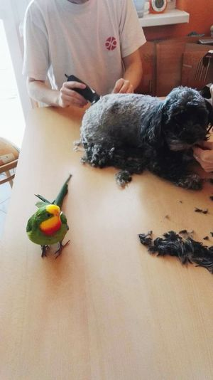 Parrot Dog Parrot And Dog Cuting A Dog With Parrot This Is Something Funny To Watch :D
