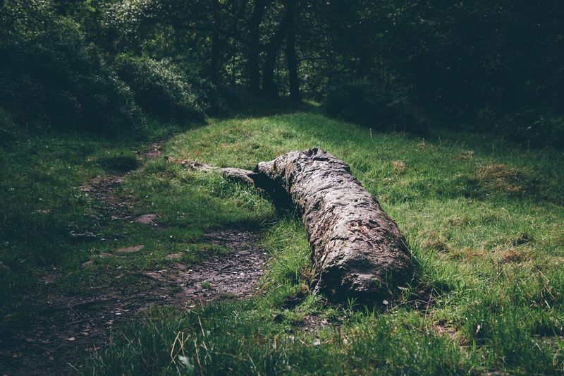Exploring the forest in and around Lud's Church. Tree Forest Tranquility WoodLand Nature Tranquil Scene Fallen Tree Green Color Solitude Beauty In Nature Photooftheday Lush Foliage Vscocam EyeEmBestPics Eye4photography  VSCO Cam VSCO Vscogood