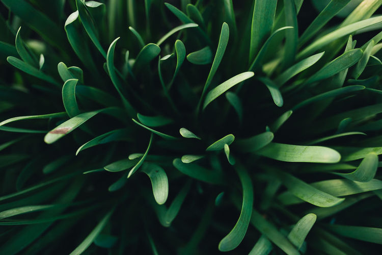 Small fresh green garlic leaves with macro effect. high quality photo