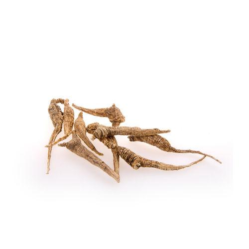 Close-up of grasshopper on white background