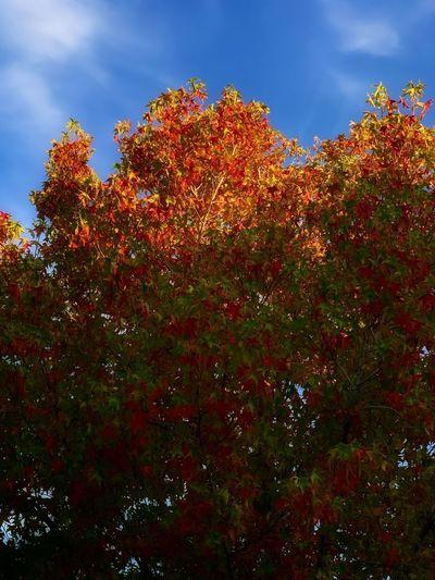 Fall Weathe