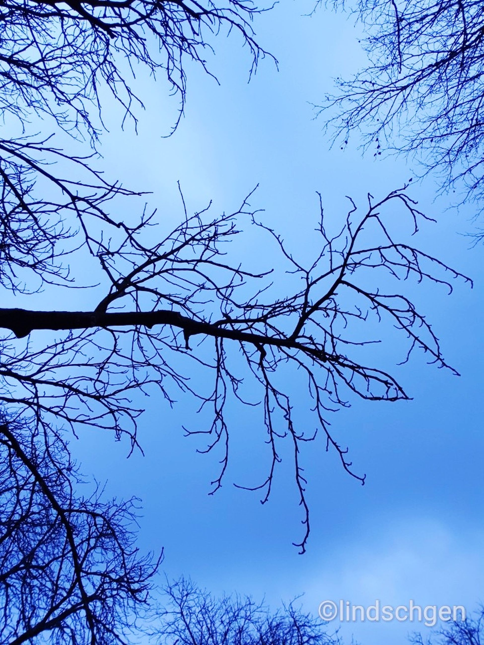 tree, branch, sky, plant, nature, beauty in nature, bare tree, low angle view, no people, silhouette, blue, tranquility, clear sky, outdoors, day, scenics - nature, growth, tranquil scene, dusk