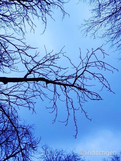 Blick nach oben Beauty In Nature EyeEm Nature Lover Bäume Himmel Baumkronen Winter Beautiful Nature Branch Bare Tree Astronomy Blue Moon Water Silhouette Autumn Tree Area