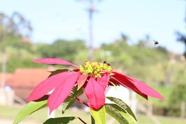 Flower Nature Plant First Eyeem Photo