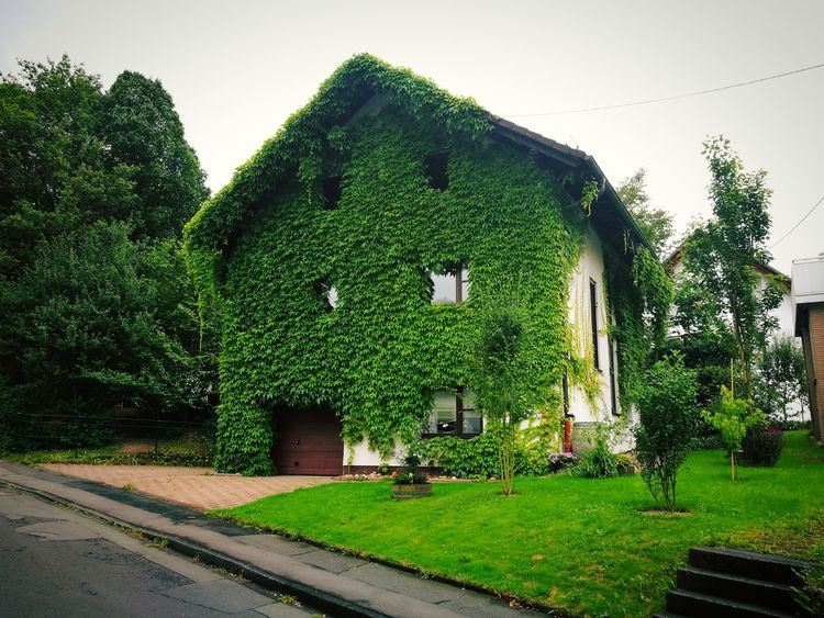 Green Color Architecture Built Structure Lawn Листочки Germany Today Deutschland Ist Schön Germany🇩🇪 Germany Photos Deutschland германия Huawei Photography Huawei P9 Plus Huaweiphotography Huawei P9 Photos HuaweiP9plus HuaweiP9 Huawei P9 Leica Huawei Shots Beautiful ♥ Land Auf Dem Land Leaf деревня Green Color
