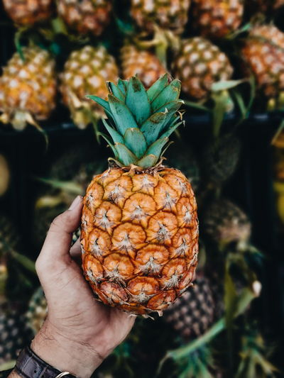 Cropped hand of person holding pineapple