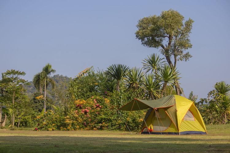 Tent and palm trees on field against sky