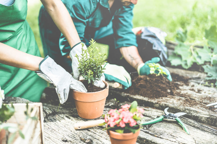 Gardeners preparing plants for local market Growth Plant Gardening Nature Real People Day Planting Lifestyles Holding Human Hand Hand Green Color People Gardening Equipment Flower Pot Care Outdoors
