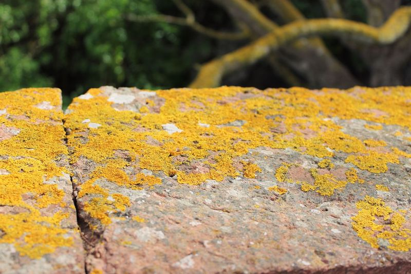 Photography Canon1100d Canonphotography Canon Trees Tree Wall Yellow Outdoors Close-up Nature No People Day Textured  Beauty In Nature Fungus