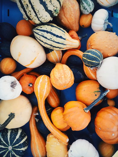 Market Farmers Market Healthy Eating Healthy Autumn Autumn colors Pumpkin Pumpkins Pumpkins On Display Backgrounds Full Frame Close-up Food And Drink Squash - Vegetable Fall Assortment Market Stall Farmer Market For Sale Stall