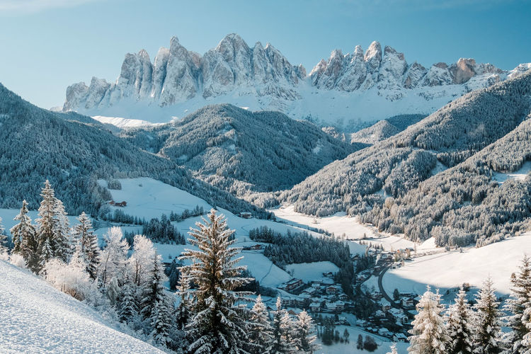 Winter panorama of fir trees covered with white snow with dolomites mountain background, italy.