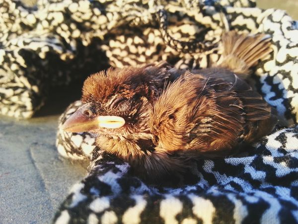 Poor Baby Bird , ,