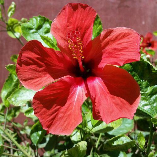 Flowers Morocco Bigreds