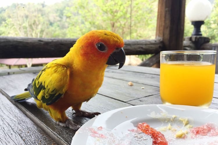 Food And Drink Animal Themes Focus On Foreground Table Bird One Animal Food Domestic Animals Freshness Outdoors Wildlife & Nature Hungry Sharing  No People Yellow Bird Human
