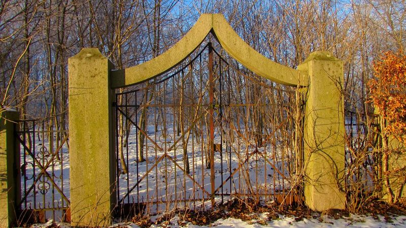 The Gate To Nowere and beautyfull ice in the tree. Abandoned Day Gate Growth Nature No People Old Outdoors Tree