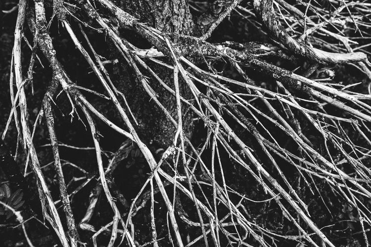 Cracks Plant Full Frame No People Cold Temperature Winter Nature Tree Backgrounds Complexity Snow Day Close-up Frozen Branch Root Tangled Outdoors Tranquility Beauty In Nature Ice Dead Plant Fine Art Photography Monochrome Abstract Nature