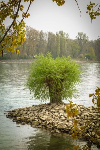 Beauty In Nature Forest Green Color Growth Lake Landscape Leaf Nature No People Outdoors Rhein Sallow Tree Water