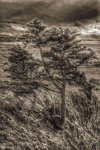 Lone Tree Water