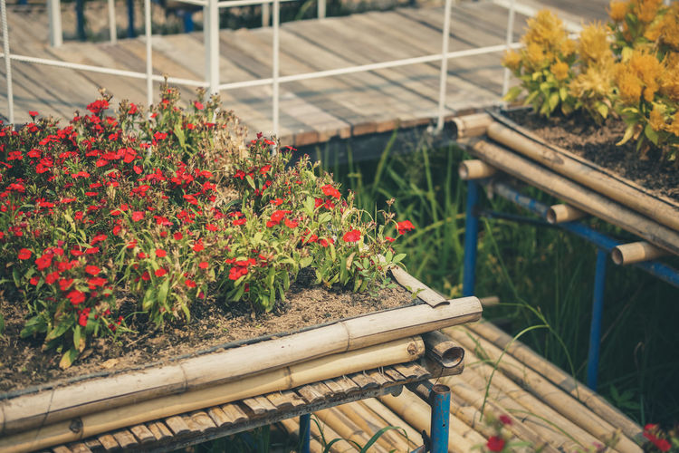 Close-up of red flower plants in greenhouse