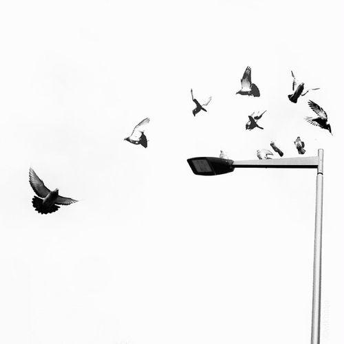 Doves Birds In