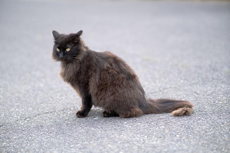 Portrait of cat sitting on street in city