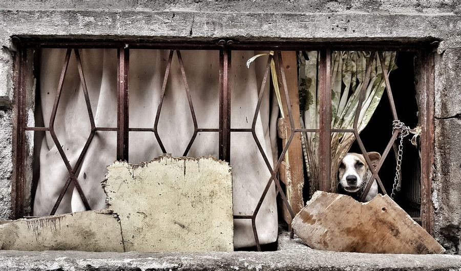 Doggie in the window Eyeemphotography EyeemPhilippines Streetphotography Street