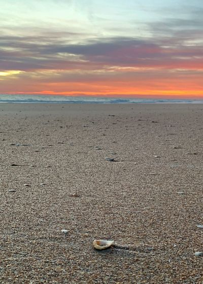 Shell in the sand looking on to ocean Shell Beach Sunrise Daybreak St. Augustine Beach Sky Sunset Sea Beach Scenics - Nature Beauty In Nature Tranquility Tranquil Scene Horizon Over Water Cloud - Sky Nature Water Orange Color No People Horizon Sand Idyllic Outdoors