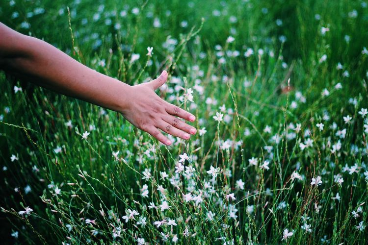 inspiration and nature Beauty In Nature Day Field Flower Focus On Foreground Fragility Freshness Grass Grassy Green Color Growth Nature Outdoors Person Petal Plant Touching Tranquility Uncultivated